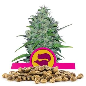 Semillas de Skunk XL a granel