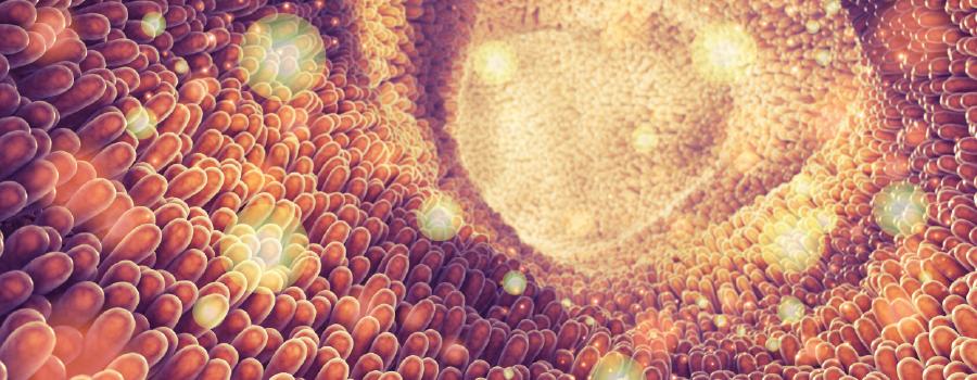 Absorción edibles metabolizado hígado thc