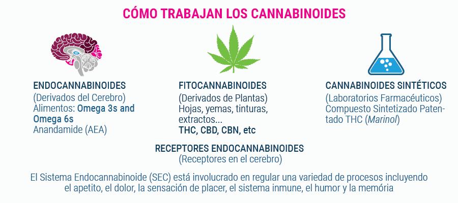 Cómo funcionan los cannabinoides