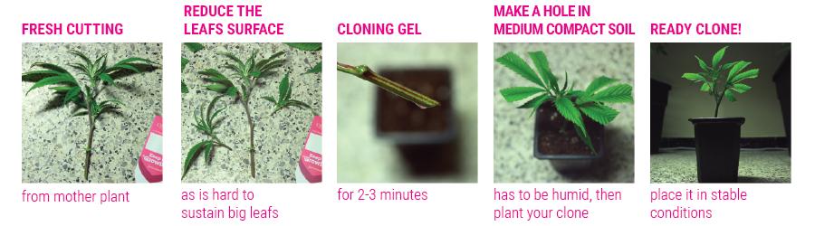 tutorial clones