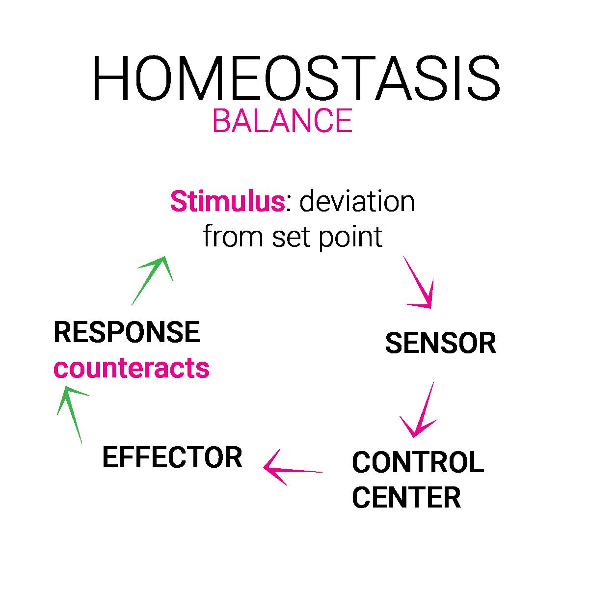 equilibrio de homeostasis