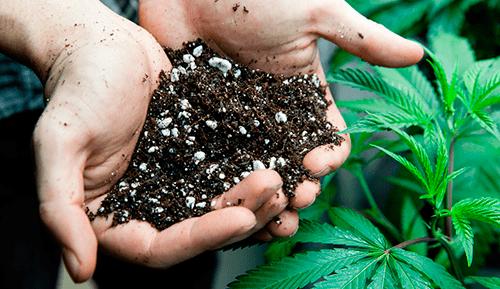 tierra esterilizada cannabis