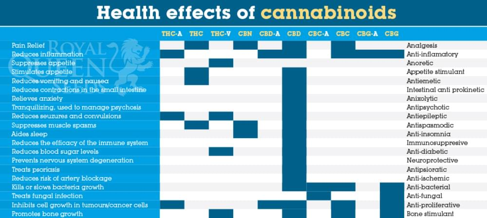 [Obrazek: Health_effects_of_cbd%20(1).jpg]