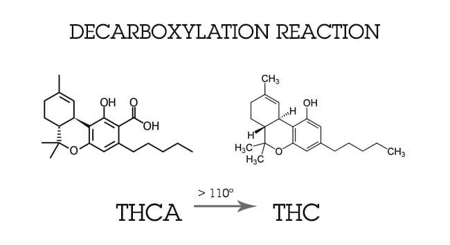 descarboxilación CANNABIS