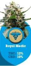 Royal Medic a Medical cannabis strain with high cbd levels