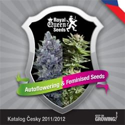Checa Royal Queen Seeds feminizada cannabis catálogo de semillas