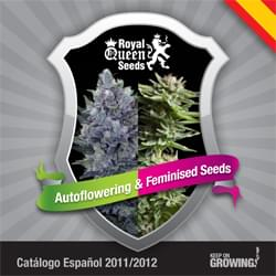 Español Royal Queen Seeds feminizada cannabis catálogo de semillas