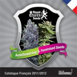 Francés Royal Queen Seeds feminizada cannabis catálogo de semillas