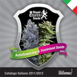 Italiano Royal Queen Seeds feminizada cannabis catálogo semillas