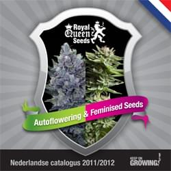 Holandesa Royal Queen Seeds feminizada cannabis catálogo de semillas