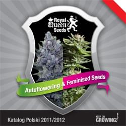 Polaco Royal Queen Seeds feminizada cannabis catálogo de semillas