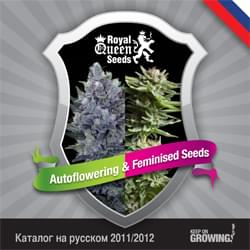Rusia Royal Queen Seeds feminizada cannabis catálogo de semillas