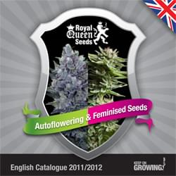 Inglés Royal Queen Seeds feminizada cannabis catálogo de semillas