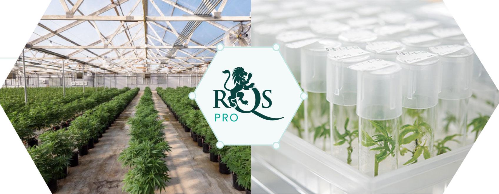 XRQS Pro: liderando la innovación y el desarrollo del cannabis