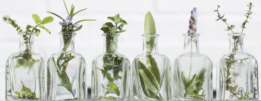 Aceites esenciales de cannabis