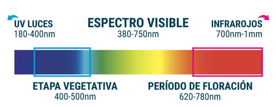 Espectro Luminoso Cannabis