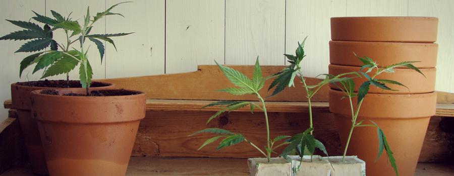 Uruguay parlamento legalización cannabis