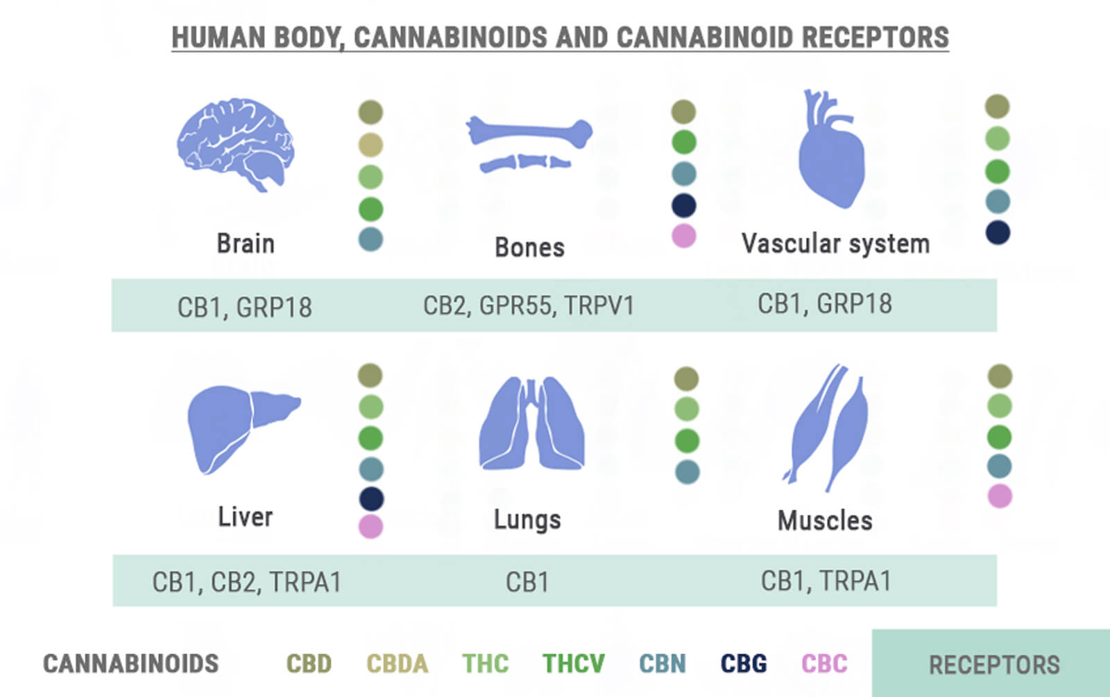 Body, Cannabinoids and Receptors