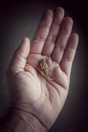 La microdosificación de cannabis consume beneficios seguros