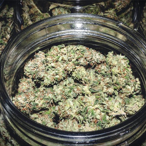 secado cogollos de cannabis humedad luz