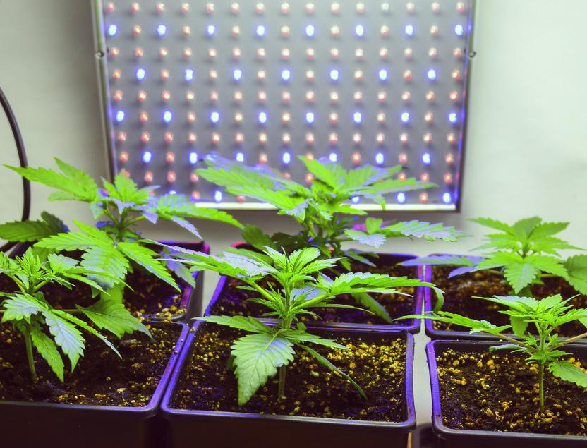 Irlanda legalizació cannabis medicinal ley