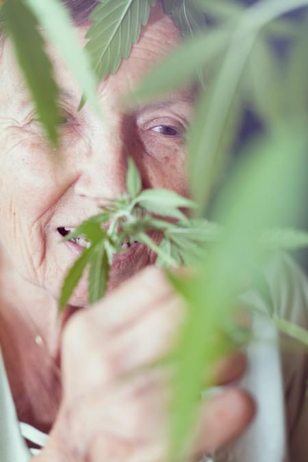 La cepa Parkinson cannabis Royal Queen Médico El dolor crónico Alzheimer Artritis Depresión