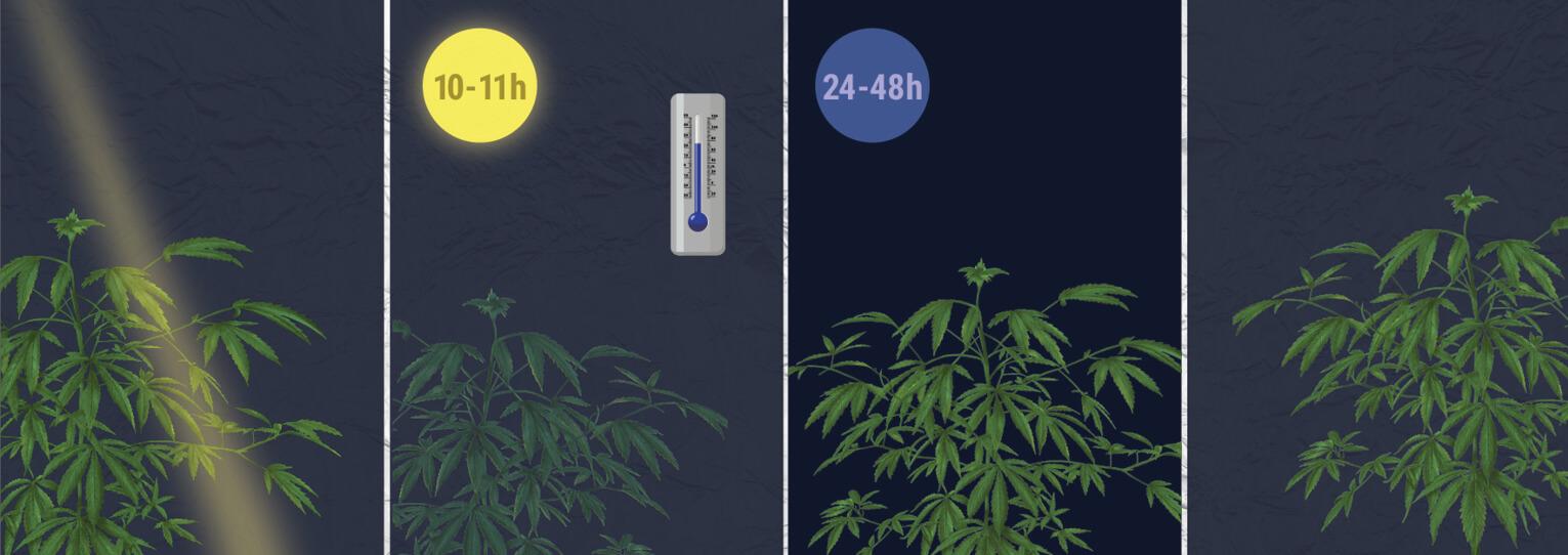 ¿Cómo se fuerza la floración de una planta fotoperiódica?