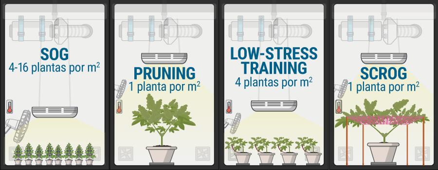 Cu 225 Ntas Plantas De Marihuana Cultivar Por Metro Cuadrado