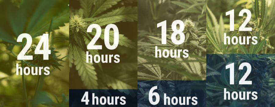 Horario de Cultivo