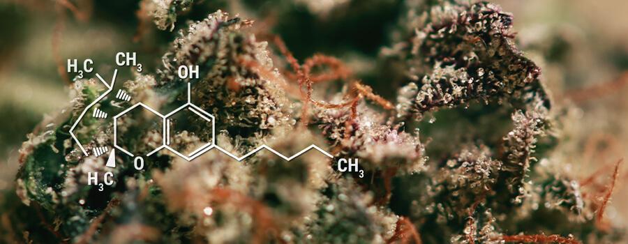 CBL Cannabinoids