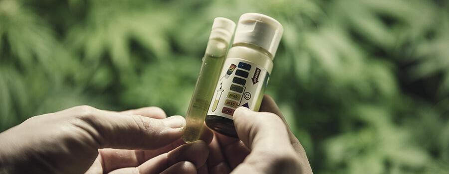 Medidor PH Atrofia o crecimiento lento en las plantas de marihuana