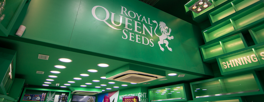Royal Queen Seeds tienda Barcelona Pelai
