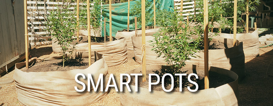 Cultivo De Cannabis Smart Pots