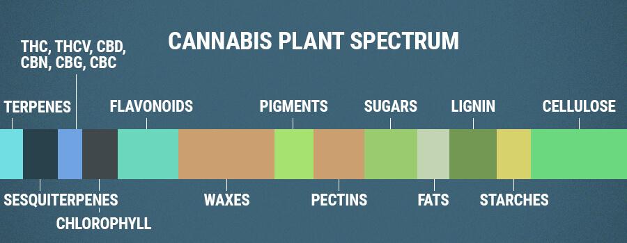 Flavonoides Del Espectro De Plantas De Cannabis