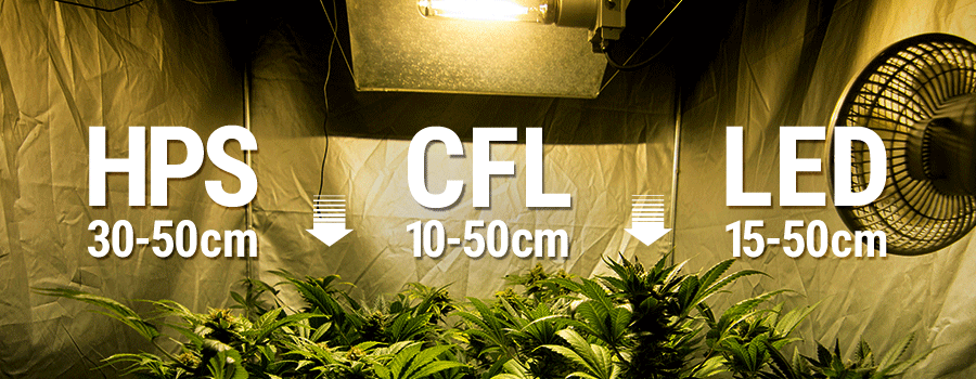 Distancia De Luces En Cultivo Interior Cannabis