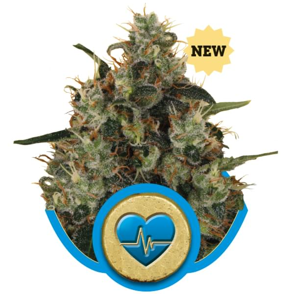 Medical Mass CBD variedades de cannabis