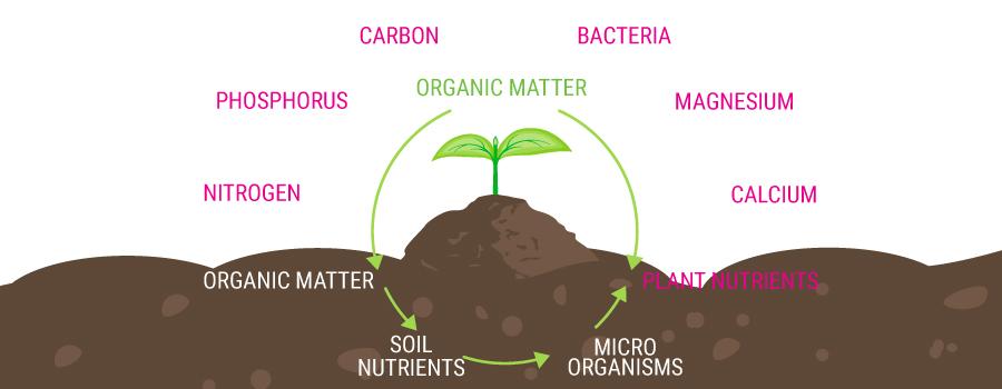 Cadena de alimentación orgánica