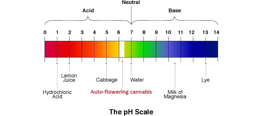 El valor de PH perfecto para una planta de cannabis