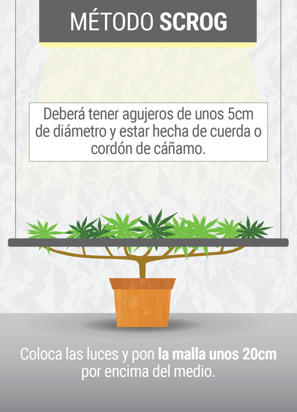 Cultivando cannabis con el método SCROG (Screen of Green) Segunda Fase