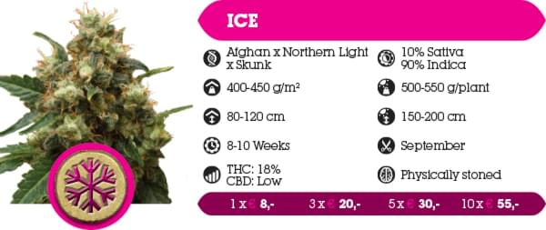ICE Indica Crystal Extreme