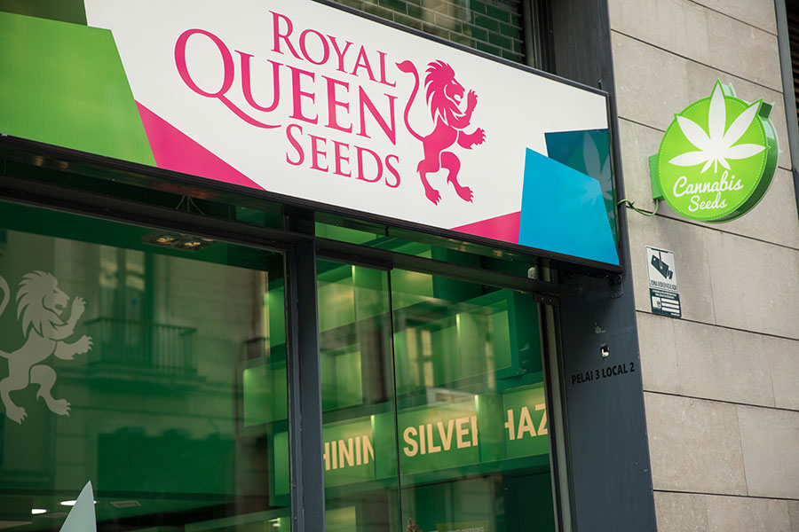 Nuestras tiendas de Barcelona ofrecen a los cultivadores semillas de  marihuana de la marca Royal Queen Seeds de la mejor calidad 22c276f9fa3