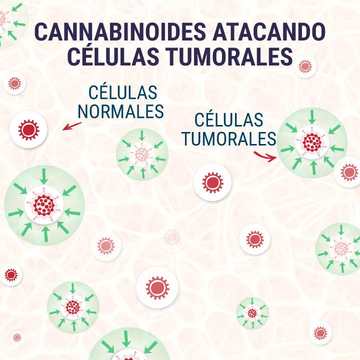 Cannabinoids-Targeting-Tumor-Cells