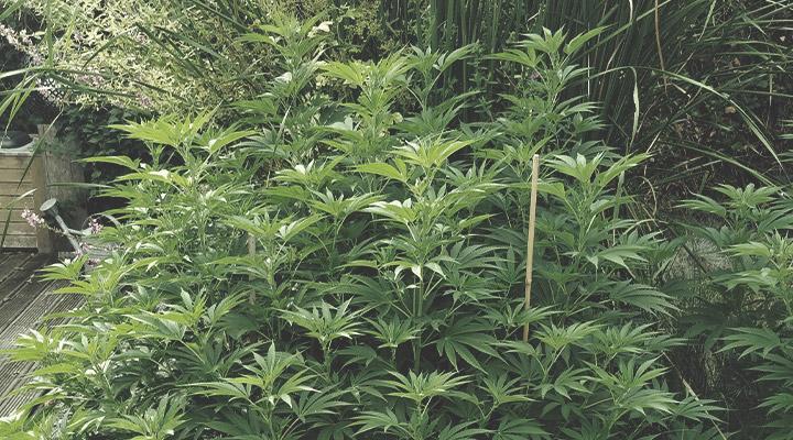 Da soporte a las plantas con cuerdas y estacas