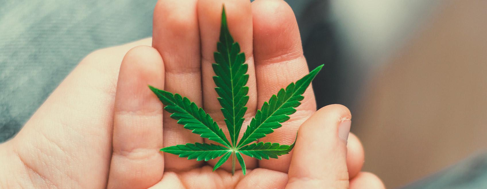¿Cómo podemos presentar el tema del cannabis a nuestros hijos?