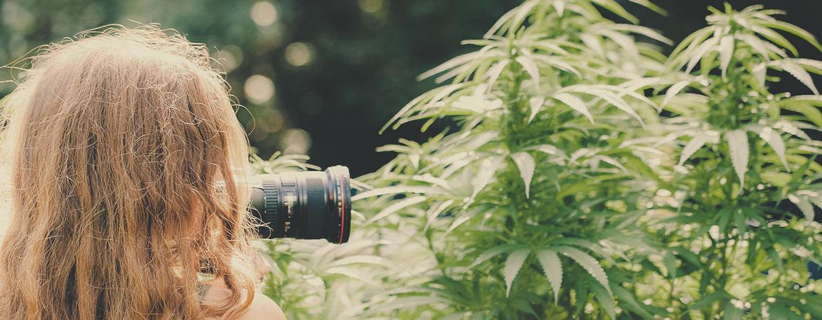 ¿Qué tipo de proyectos se pueden esperar de un fotógrafo de cannabis (por ejemplo, en el sector inmobiliario, para dispensarios, fotoperiodismo cannábico...)?