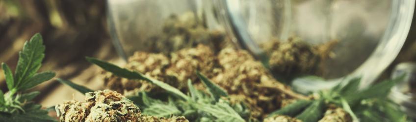 10 mitos sobre la marihuana desmentidosa