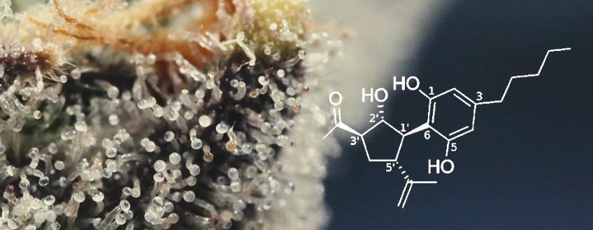 Te presentamos el CBM, un 'nuevo' cannabinoide del cáñamo