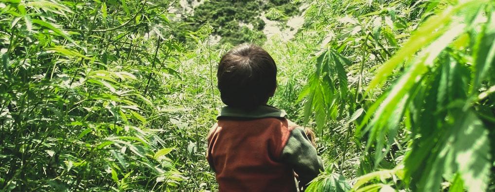 ¿El cannabis hace que un padre esté apático y con poca energía, afectando a la concentración necesaria para cuidar de sus hijos?