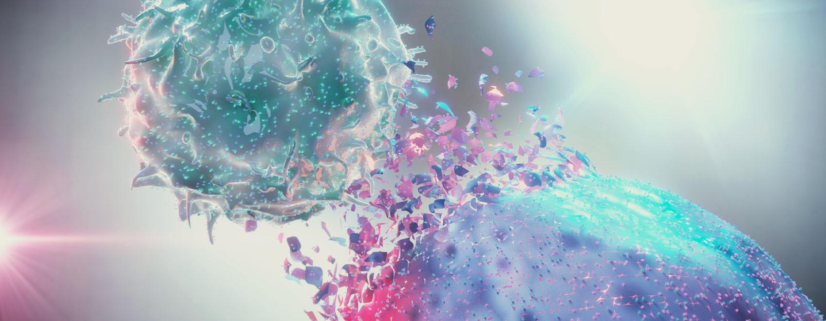El papel del sistema endocannabinoide en la inmunidad