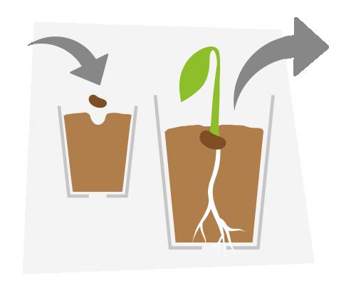 trasplante de semilla